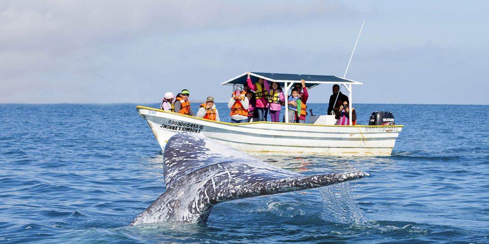 whale-watching-tour-puerto-vallarta.jpg